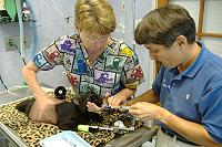 Dr. May-Li Cuypers - The Cat Hospital on Park Street St. Petersburg, Pinellas, FL