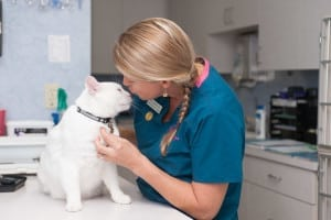 Loving Care at the Cat Animal Hospital in St Petersburg FL